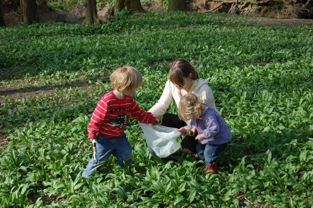 Cath and kids picking wild garlic leaves at wowo campsite