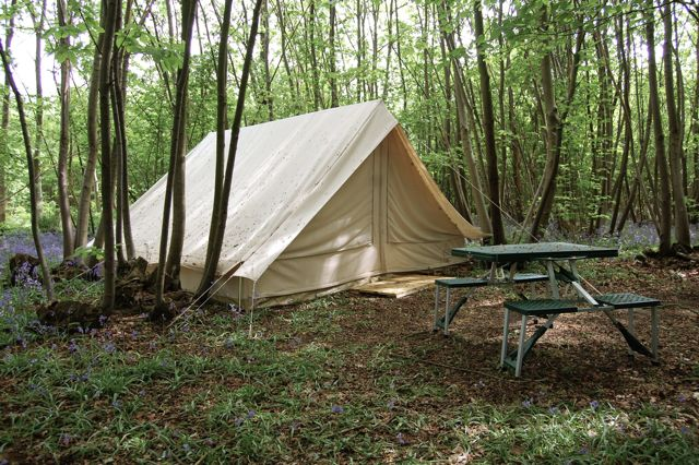 Ridge tent in the woods of Welsummer campsite